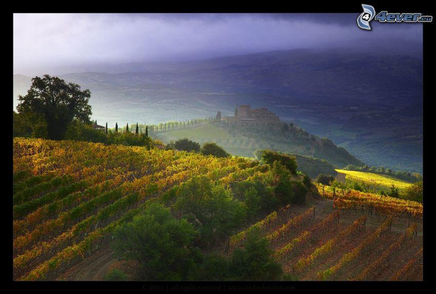 vingård, slott, utsikt över landskap