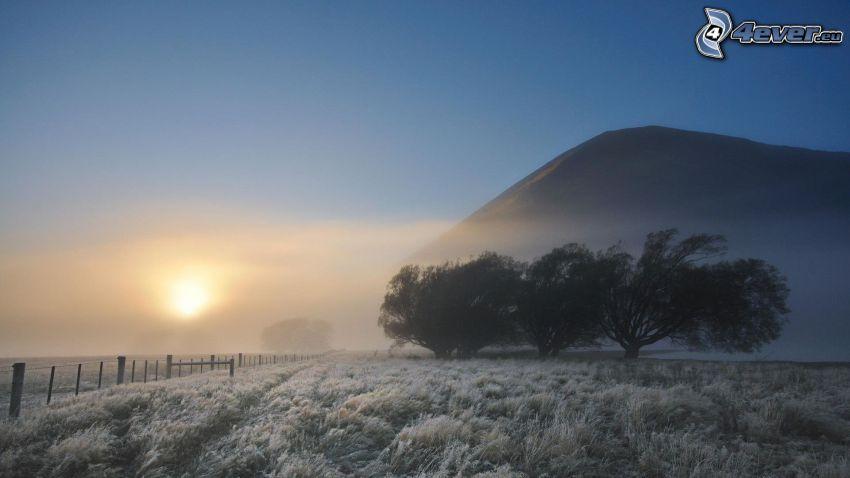 vinterlandskap, dimmig morgon, fruset gräs