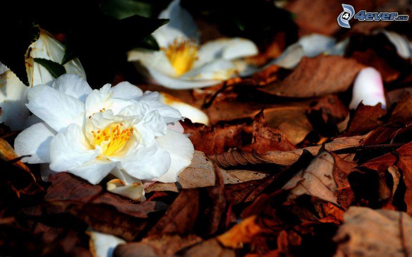 vit blomma, nedfallna löv