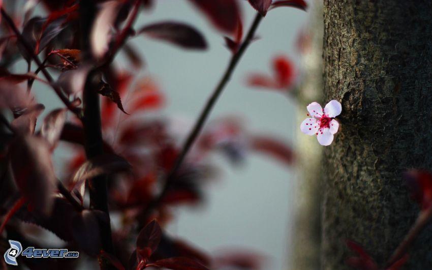 vit blomma, stam