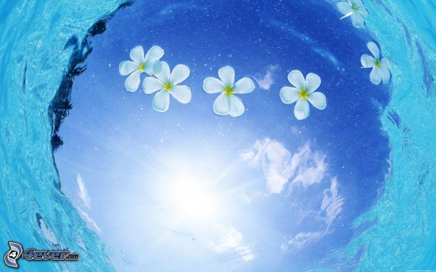 vita blommor, azurblå hav