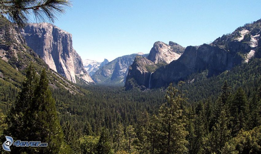 Yosemite National Park, El Capitan, dal, skog