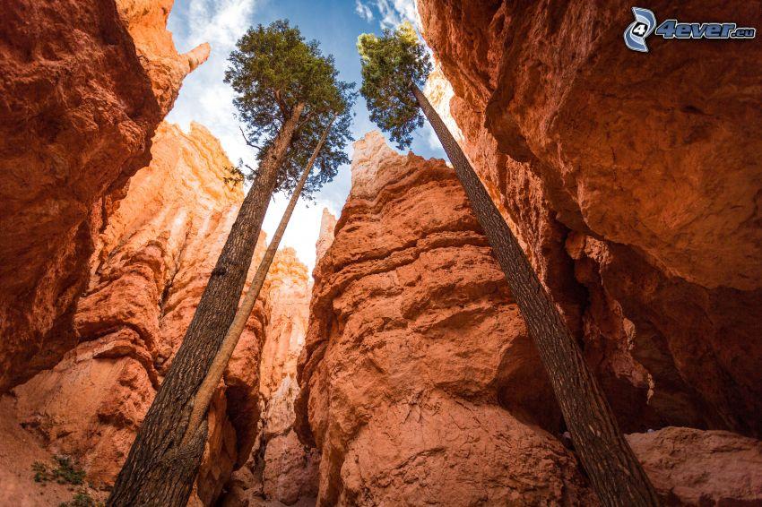 Zion National Park, ökenklippor, träd