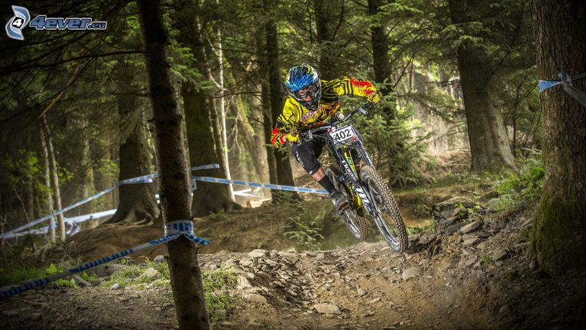 MTB Downhill, skog