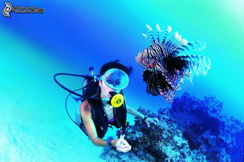 dykare, fisk
