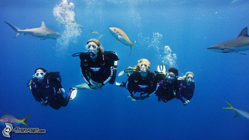 dykare, fiskar, hajar