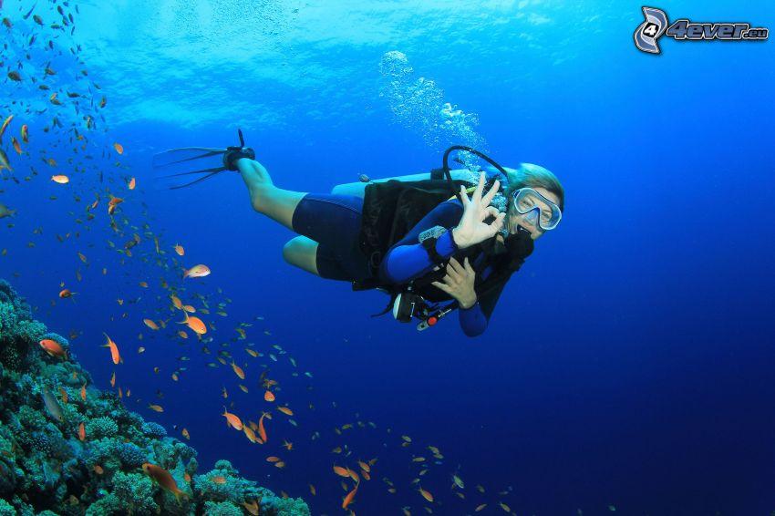 dykare, fiskstim, koraller