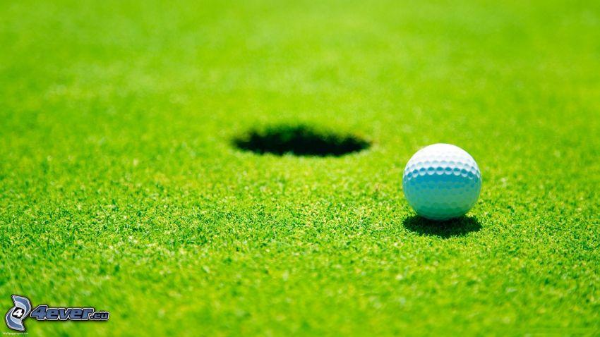 golf, gräsmatta, golfboll