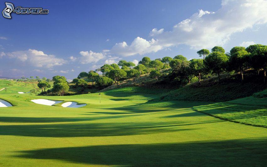 golfbana, gräsmatta, träd