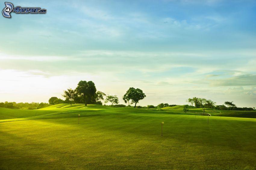 golfbana, park, träd