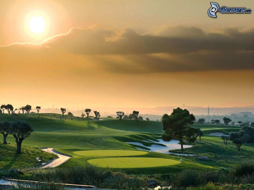 golfbana, träd, sol