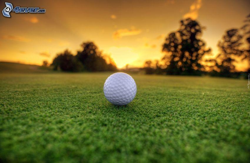 golfboll, gräsmatta, efter solnedgången, siluetter av träd