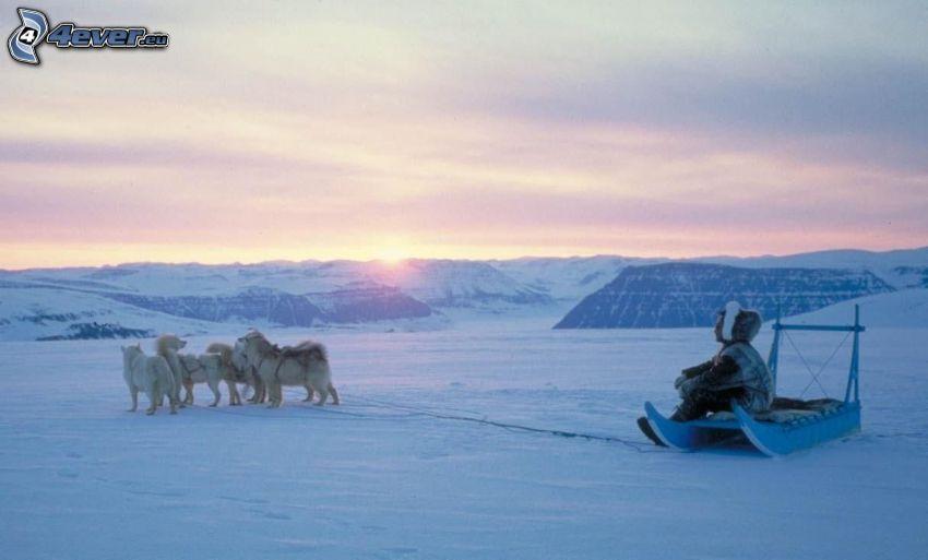 hundspann, Siberian Husky, soluppgång