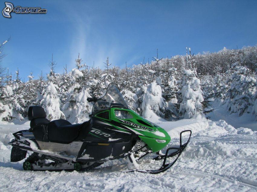 snöskoter, snöig skog