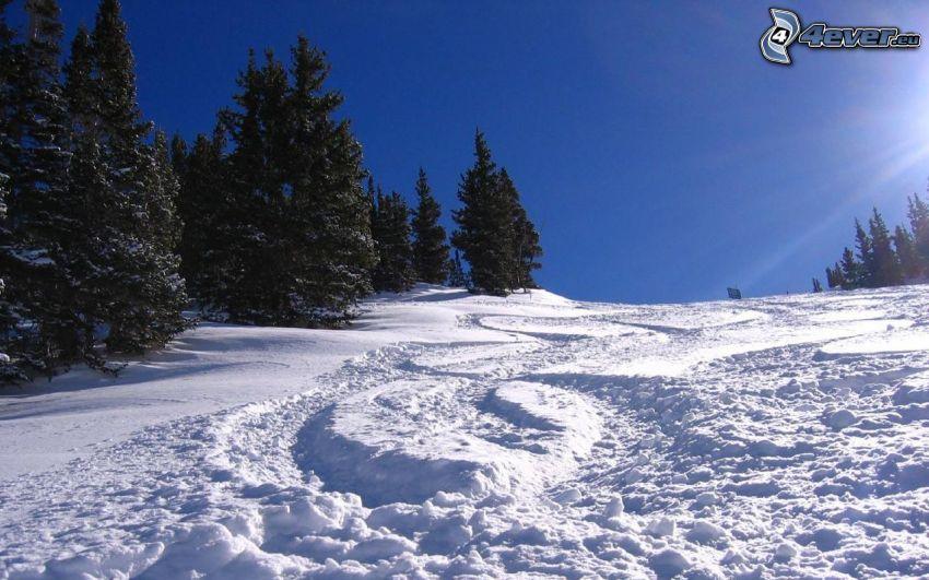 backe, barrträd, snö