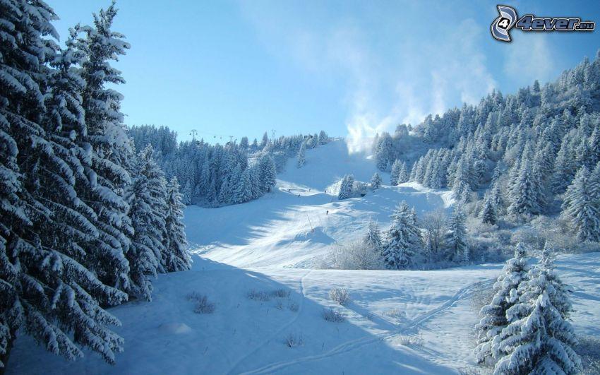 backe, skidåkare, snöigt landskap