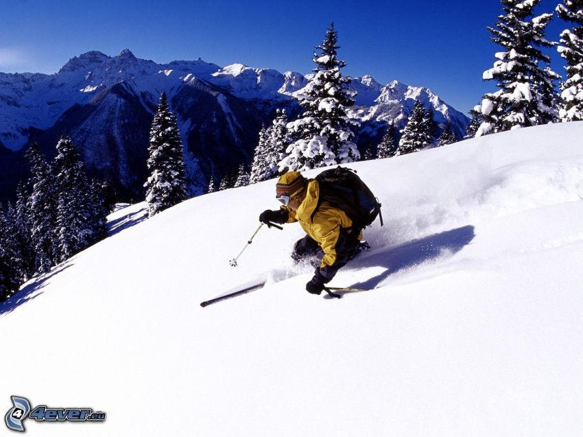 extrem skidåkning, snöklädda träd, snöklädda berg