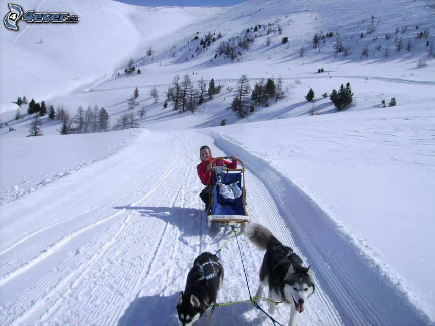 hundspann, snö, berg
