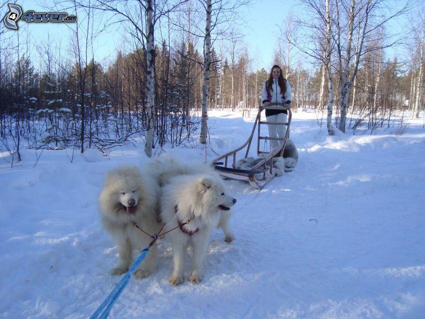 hundspann, snö