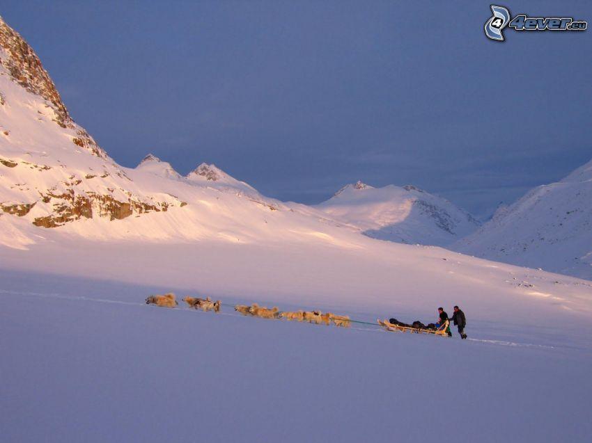 hundspann i fjällen, snö, Grönland