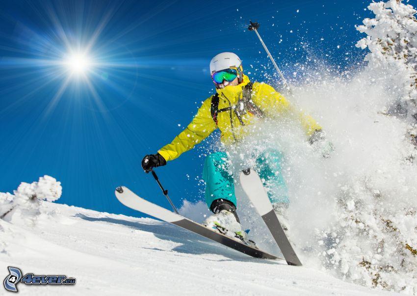 skidåkning, skidåkare, sol, snöigt träd