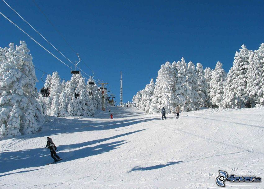 skidåkning, snö, snöklädda träd