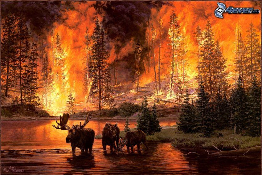 älgar, flod, brand