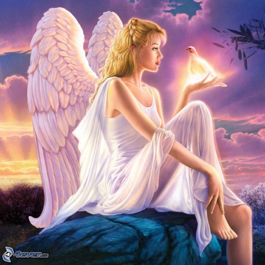 ängel, duva, vit klänning, vingar