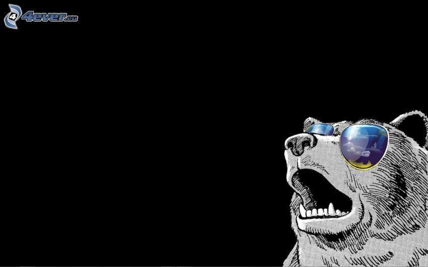 björn, solglasögon