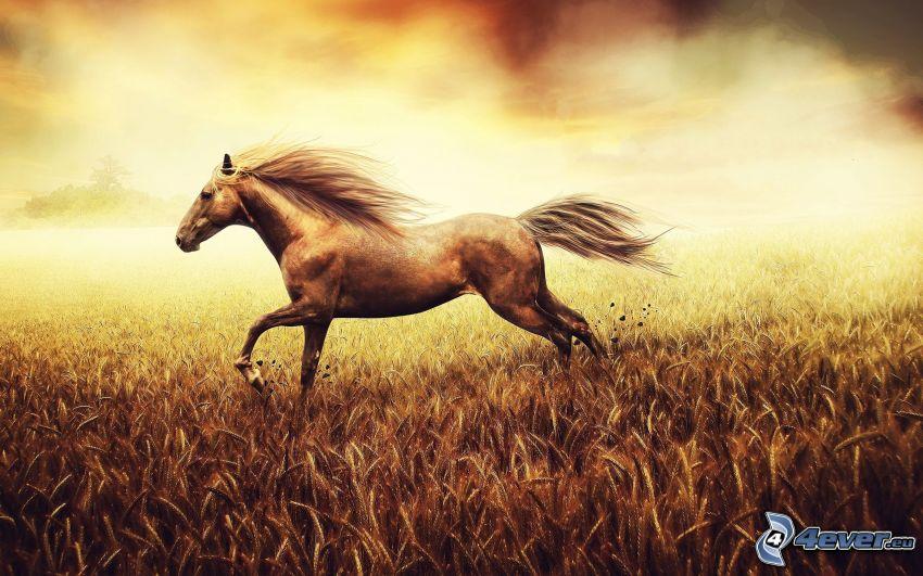 brun häst, åker
