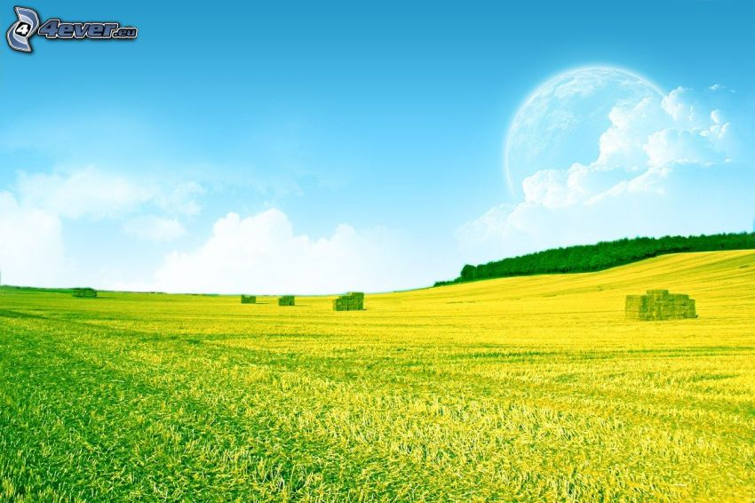 äng, himmel, landskap, måne