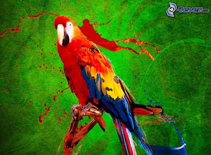 Ara papegoja, röd färg, blå färg