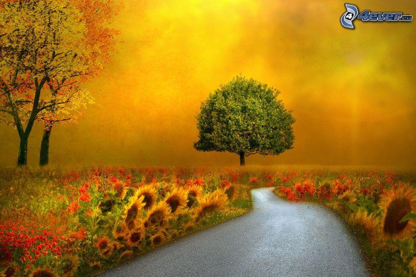bäck, träd, solrosor, vallmo, höstträd
