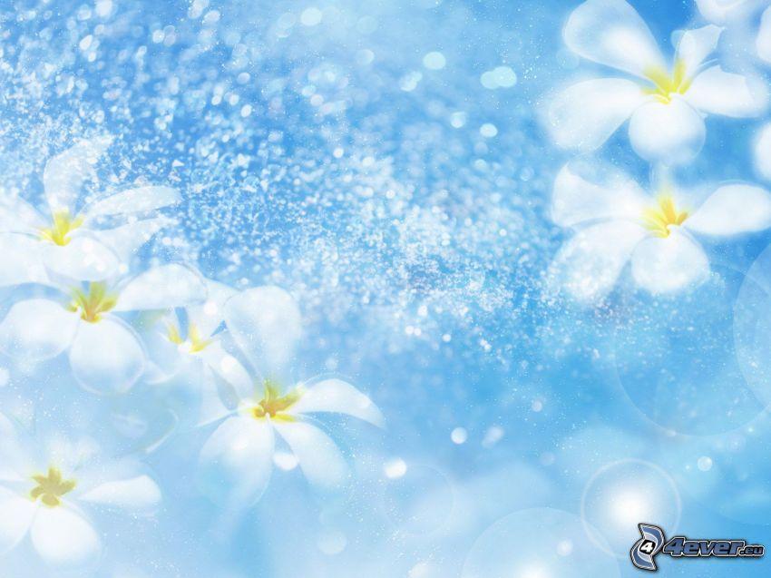 blå bakgrund, prästkragar, bubblor