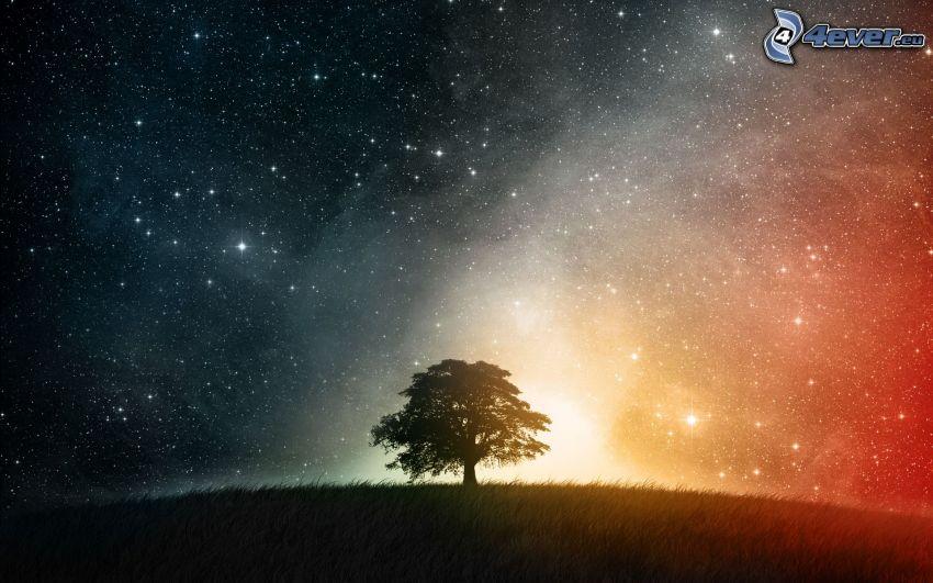 ensamt träd, universum