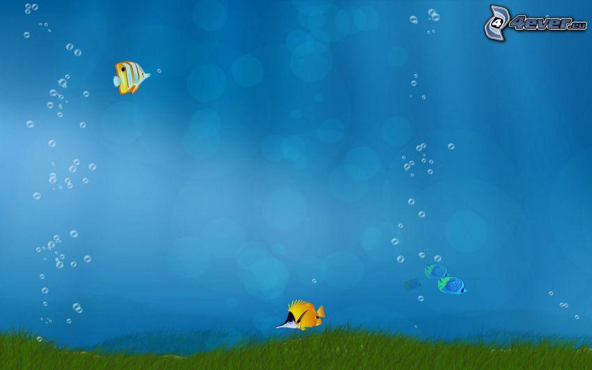 fiskar, hav