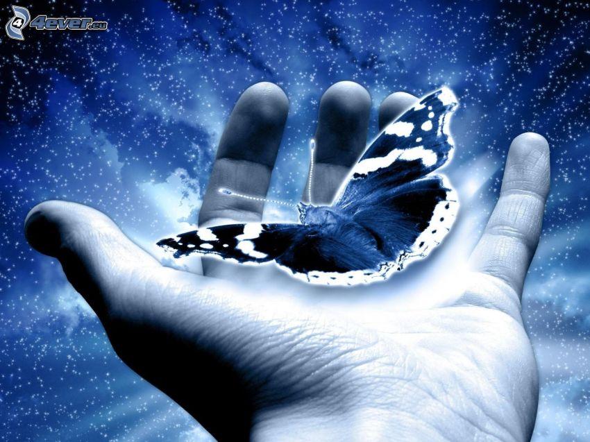 fjäril, hand
