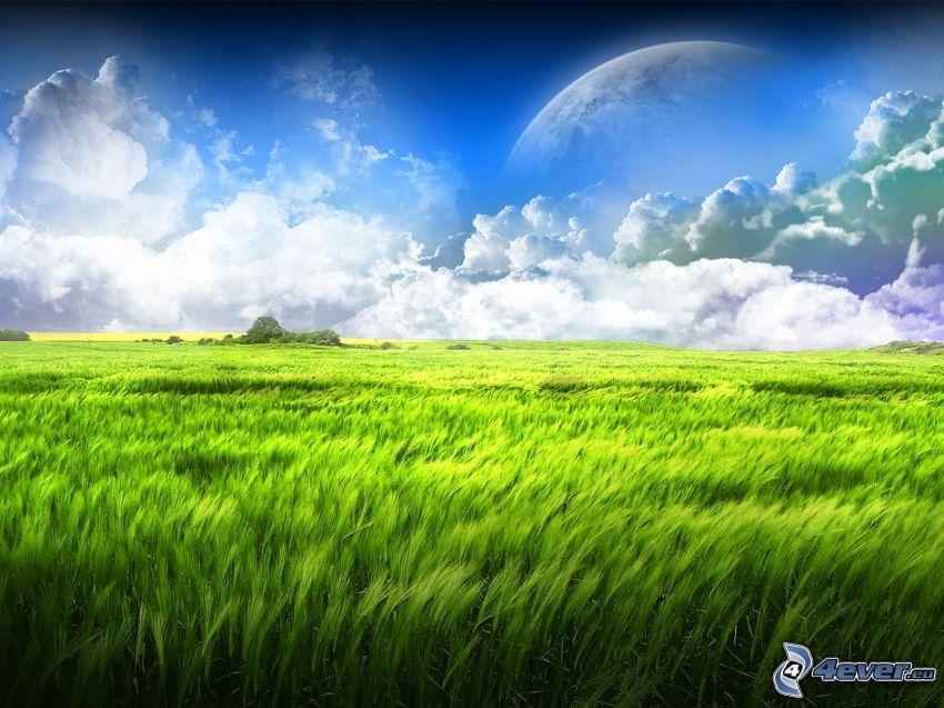grönt sädesfält, moln, måne