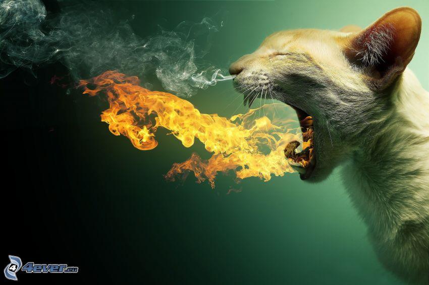 katt, flamma