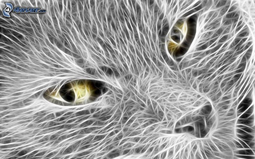 kattansikte, ögon, vita linjer