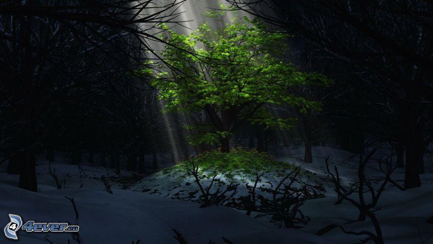 lövträd, solstrålar, mörk skog