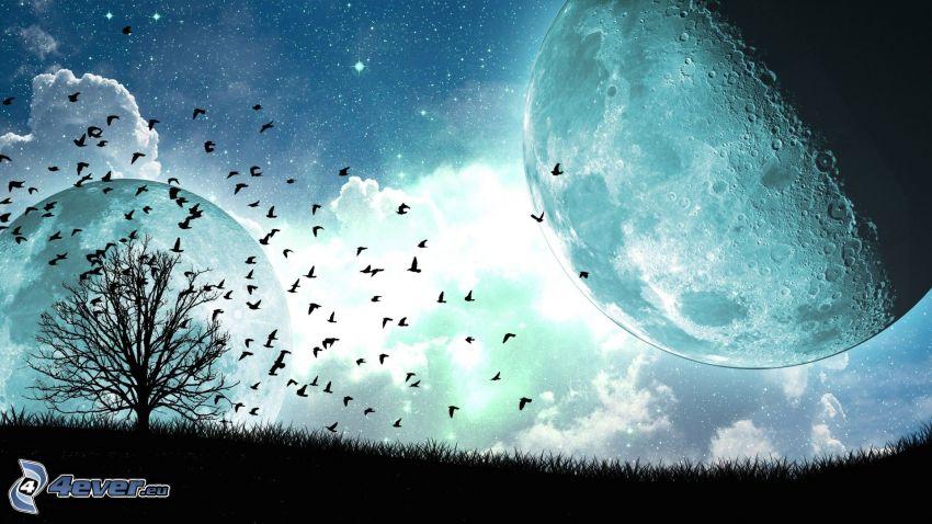 måne, siluett av ett träd, fågelflock