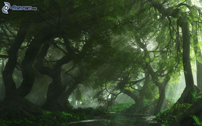 regnskog, solstrålar