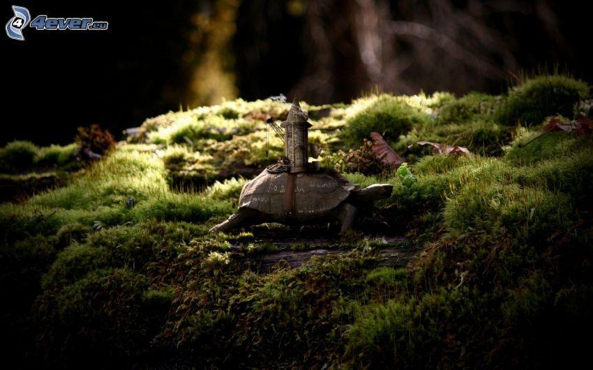 sköldpadda, torn, mossa
