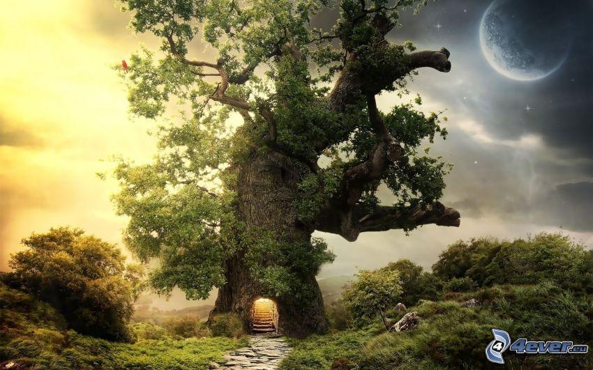 stort träd, bostad, måne, fantasy