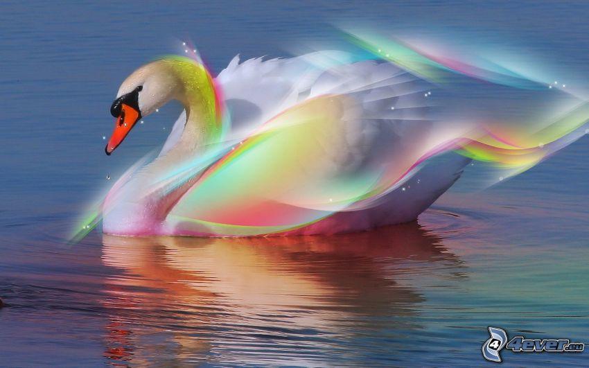 svan, regnbågsfärger, vatten