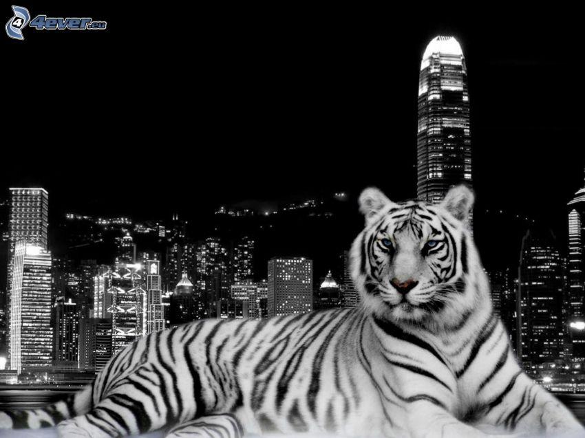 tiger, stad, Hong Kong