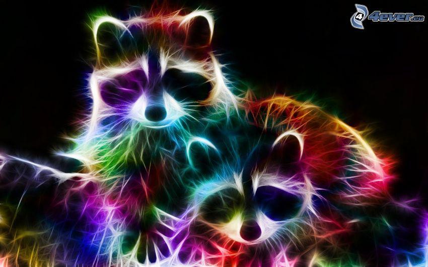 tvättbjörnar, fraktaldjur