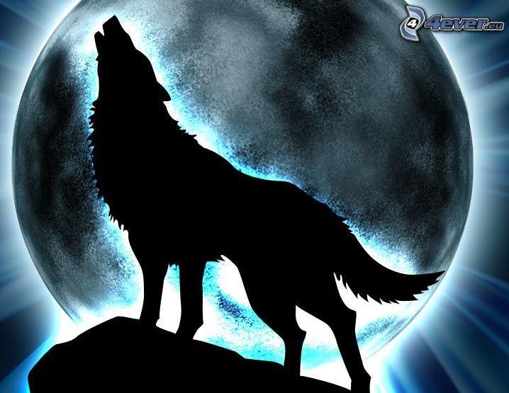 varg ylar, silhuett av varg, måne