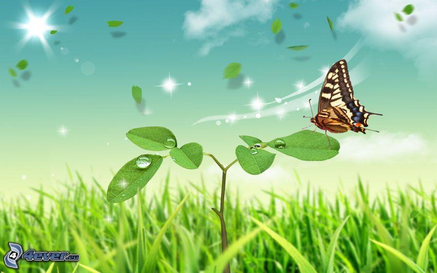 växt, fjäril, gräs, grönska